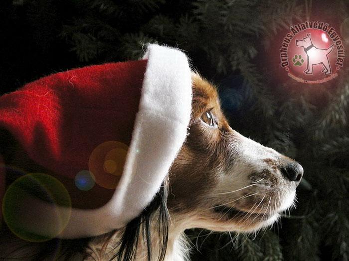 kutyakarácsony, állatvédő egyesület
